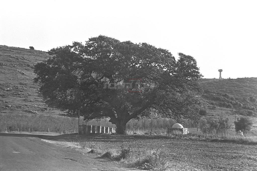 מירון, 1976 (צילום: SA'AR YA'ACOV, לע''מ)