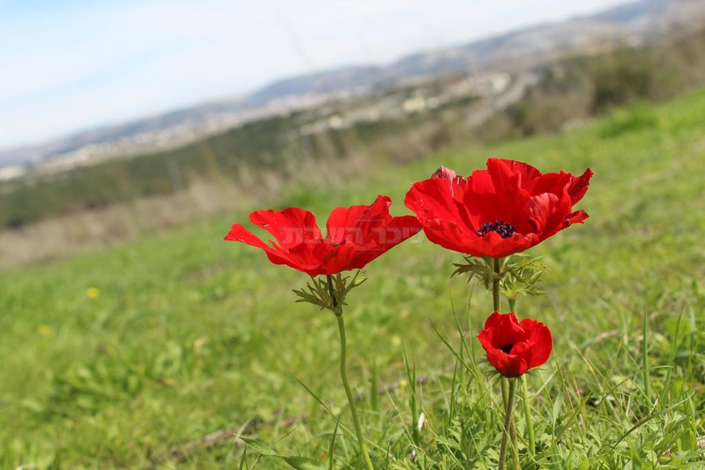 (צילום: ישראל שפר)