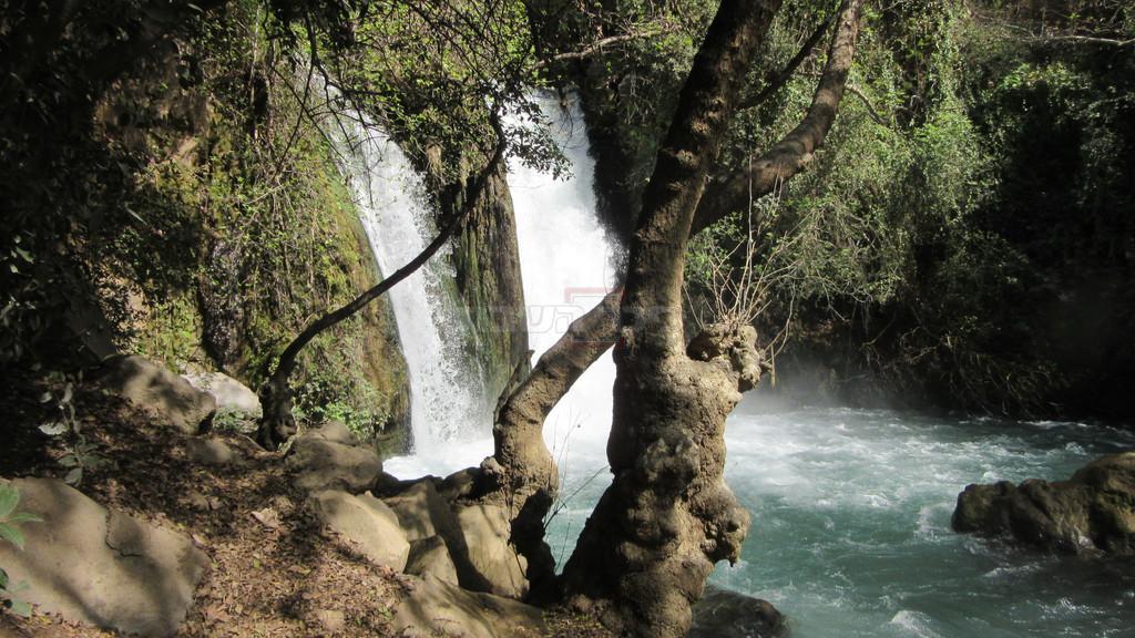 מפל הבניאס ועץ הדולב (צילום: ד''ר צבי הר-שפר)