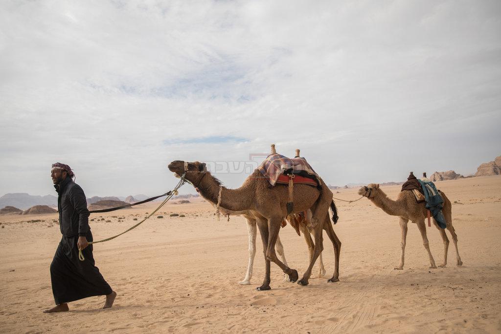 שיירת גמלים בהובלת בדואים בירדן  (צילום: הדס פרוש - פלאש 90)