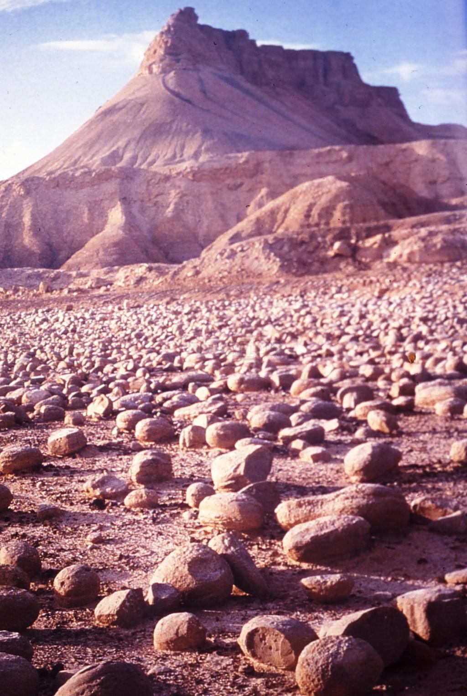 הור ההר הר צין ושדה הבולבוסים (צילום: ד''ר צבי הר שפר)