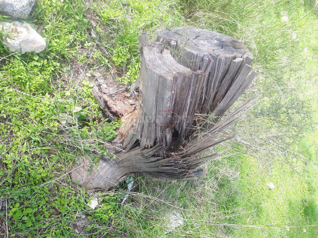 העצים שנפלו (צילום: ר' דוד ממן)