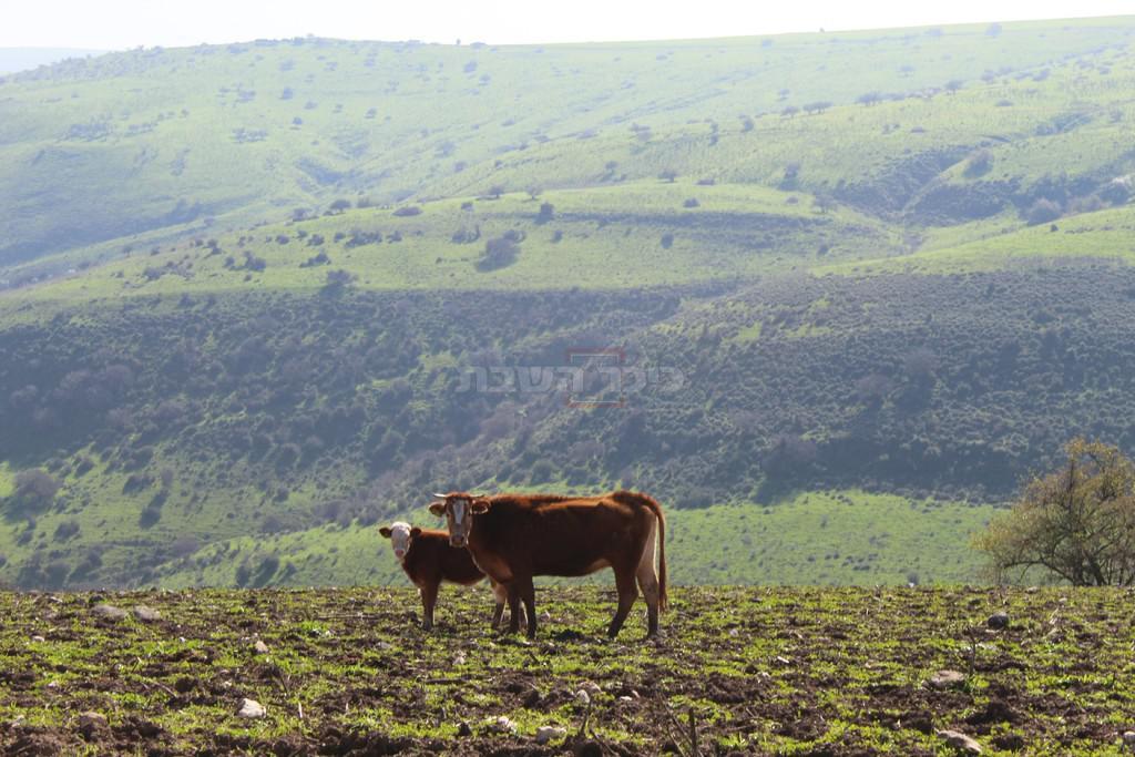 נחל תבור (צילום: ישראל שפר)