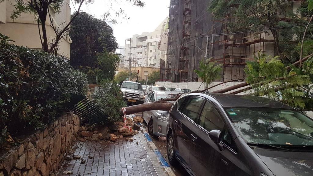 העץ שנפל ברמת גן