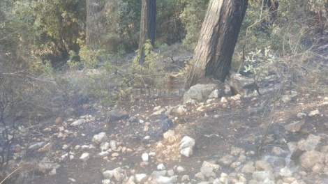 השריפה באלקוש (צילום: דוברות כבאות והצלה מחוז צפון)