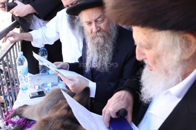 צפו: מעמד פדיון פטר חמור בירושלים