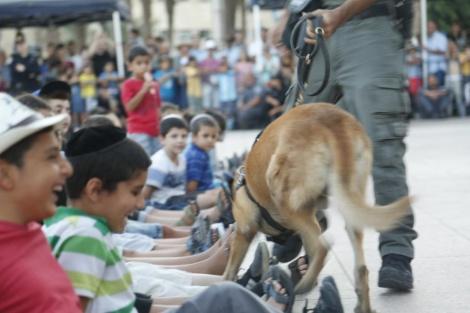 כלב גישוש (צילום: דוברות המשטרה)
