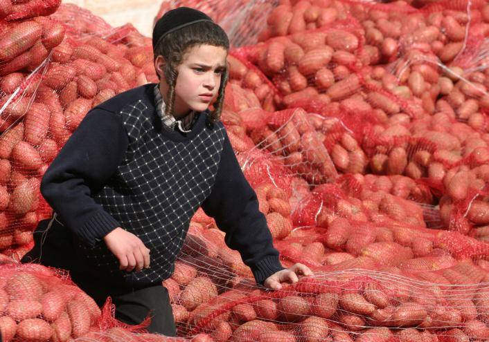 תפוח אדמה: מקור למינרלים כרום ואשלגן. אילוסטרציה. צילום: Orel Cohen/Flash90