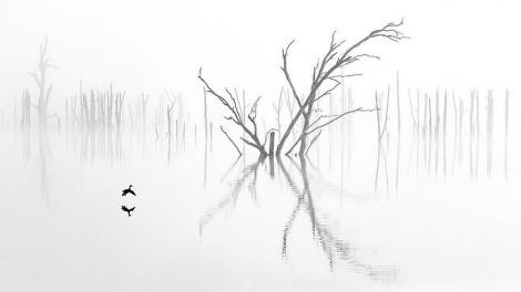 תמונת הטבע הזוכה בקטגוריית החובבים (צילום: Ray Jennings)