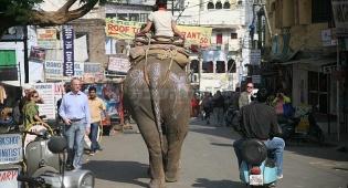 גלריה: פילים בכביש, ארמונות בכל פינה