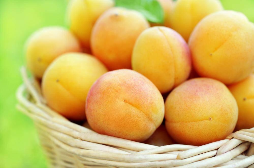 משמשים טריים. חגיגת פירות לט''ו בשבט. אילוסטרציה. צילום: שאטרסטוק