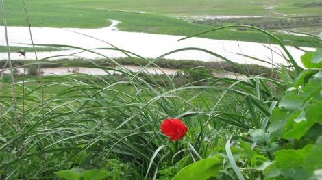 הקישון מציף את השדות באזור תל קשיש