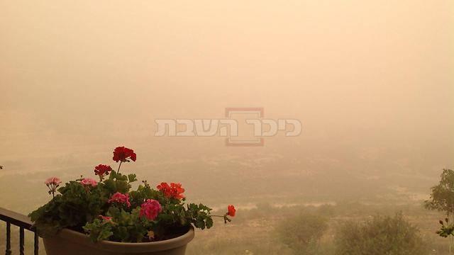 (צילום: עידו ארז - ynet)
