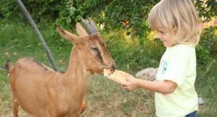 חוויה בחווה. אטרקציות לילדים ולמשפחה. - אטרקציות לילדים ולמשפחה: חוויה בחווה