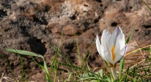 הפרחים הנדירים שברמת הגולן: צפו בגלריה
