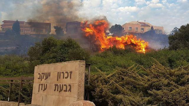 צילום: אלעד גרשגורן, ynet