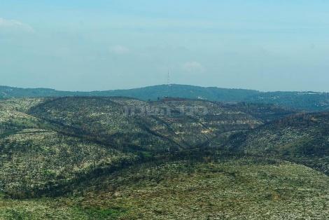 הרי הכרמל
