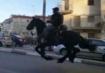 ההפגנות בירושלים צפו הסוסים מבריחים את מפגיני הפלג הירושלמי