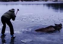 ויראלי ברשת הגולשים התרגשו שברו את הקרח בשביל אייל תקוע