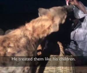 אמיצים?: הכירו את האתיופים שמאכילים חיות טורפות