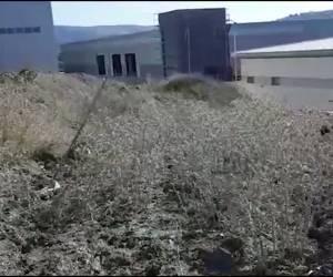 צפו בתיעוד: ארבעה חשודים בצוד חוחיות נתפסו 'על חם'