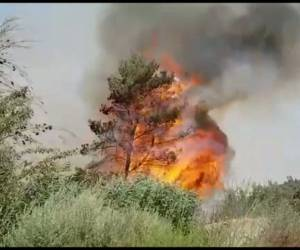 המטוסים השתלטו עליה: שריפת היער התפשטה; נבדק חשד להצתה