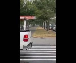 צפו בתיעוד: מרדף משעשע אחרי צבי ברחובות פלטבוש