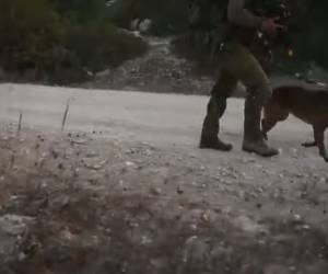 """תרגיל עוקץ: צפו: כלב מאומן תוקף """"מחבל"""" ביעילות רבה"""