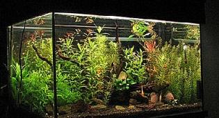 אקווריום דיסקוסים - דיסקוס ים נדיר נחשף ומוצג במוזיאון בפלמחים