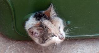 החתולה הלכודה (צילום: כיכר השבת)