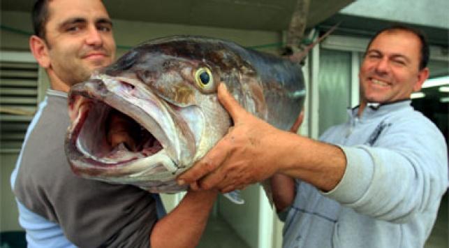יותר דגים. צילום: פלאש 90