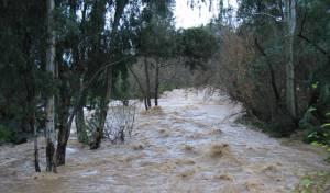 אחרי המבול: בואו לצפות בנחלים