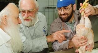 במהלך הבדיקה (צילום: ישראל ברדוגו) - תגלית: הלכות 'גיד הנשה' - גם בעופות