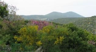 שמורת טבע הר מירון. באדיבות רשות הטבע והגנים - המקום הגבוה בישראל: שביל הפסגה