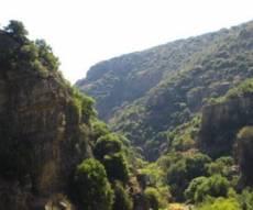 שמורת נחל עמוד, צמחיה טבעית ומסלולים לגדת הנחל