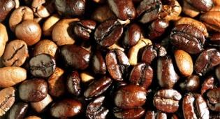 פולי קקאו. צילום: פלאש 90 - בואו לייצר שוקולד בגולן