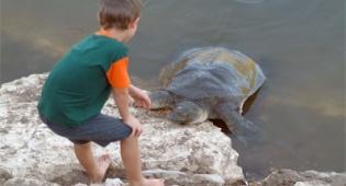 צבי ים בנחל אלכסנדר. צילום: פלאש 90 - לנחל אלכסנדר ולחוף בית ינאי