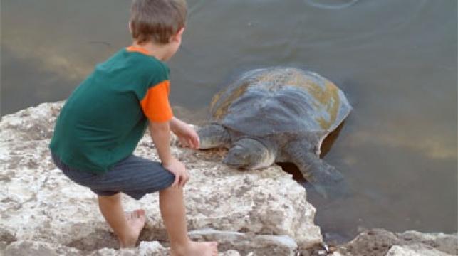 צבי ים בנחל אלכסנדר. צילום: פלאש 90
