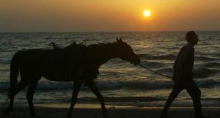 (צילום: פלאש 90) - הגנב, הסוס ואנחנו