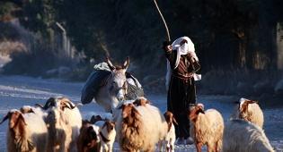 (צילום ארכיון: פלאש 90) - מבצע כבשים