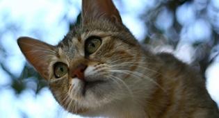 חתול (צילום: פלאש 90)