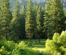 מחקר: המפתח לבריאות הוא עצים, סוג של