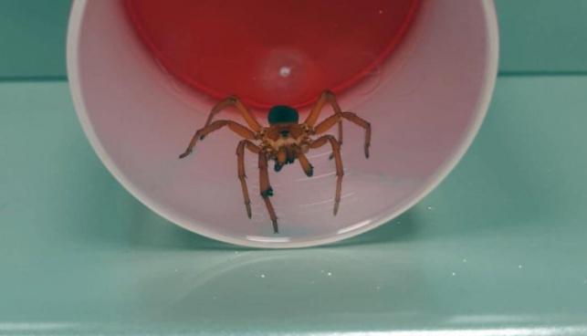 מפחיד: עכביש לא מזוהה עקץ ילדה קטנה