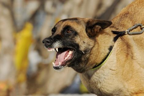 התפרצות כלבת חמורה: נסיקה של 400%