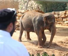 תיעוד מיוחד: ביקור בגן החיות בירושלים