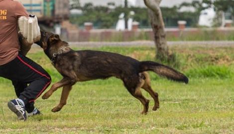 אילוסטרציה - שני כלבי רוטווילר התנפלו ונשכו אדם בחיפה