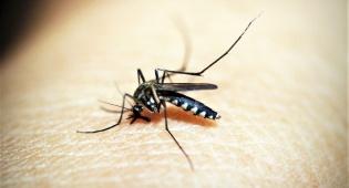 יתושים. הדם שלנו זה בעצם ממתק בשבילם