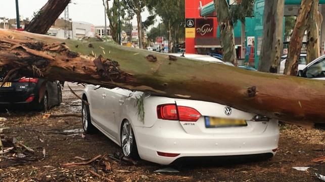 עץ שקרס בכפר סבא