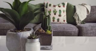 קקטוס ואלוורה: הצמחים הכי פופולריים באמריקה, ולא בכדי