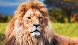 מזעזע את הרשת: האדם שקפץ לגוב האריות וניצל